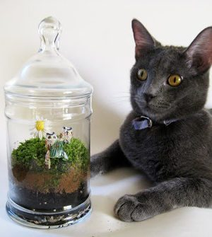Apothecary Jar Moss Terrarium – How To-sday thumbnail