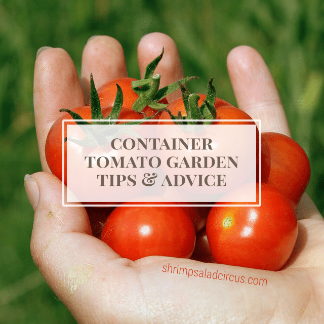 Container Tomato Gardening Tutorial