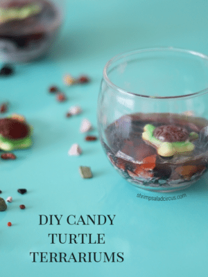 DIY Candy Turtle Terrariums – How To-sday thumbnail