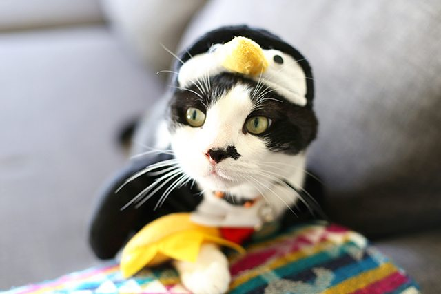 Penguin Cat Halloween Costume
