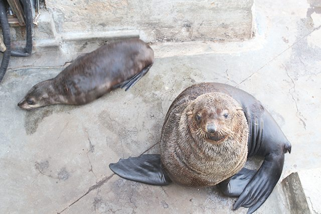 Cape Town Travel Guide - What to See - Fur Seals Lounging at the V&A Watefront