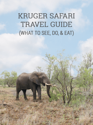 Kruger Safari Travel Guide thumbnail