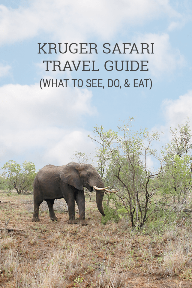 Safari at Kruger Travel Guide - What to See Do & Eat in the Kruger National Park Aarea