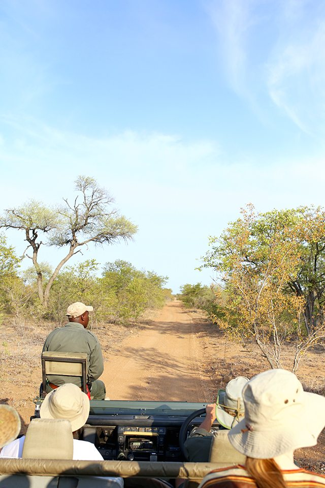 Safari at Kruger Travel Guide - Where to Stay - Africa on Foot Driving Safari