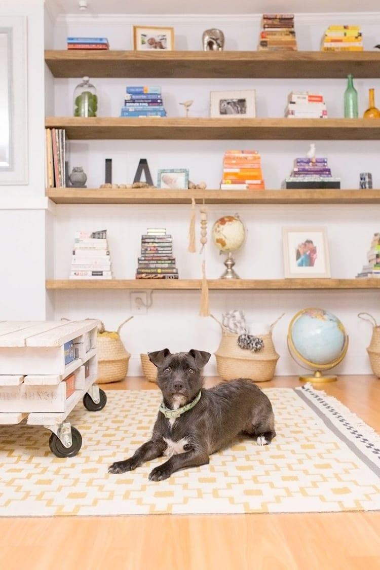 Small black terrier mutt dog in front of Wall of wooden floating shelves with books and knick knacks on them. Baskets and a globe on the floor in front of a yellow and white patterned rug.
