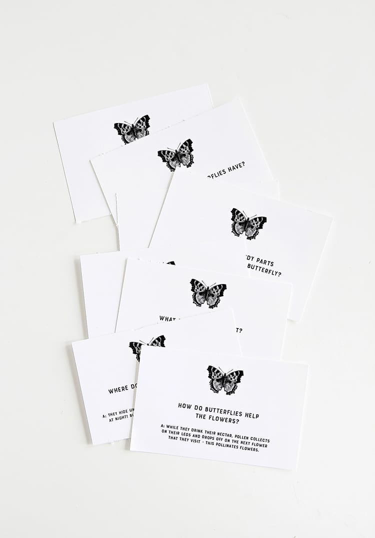 Butterfly Question Cards for Homeschool Preschool