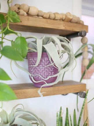Boho Modern DIY Painted Terra Cotta Pots thumbnail