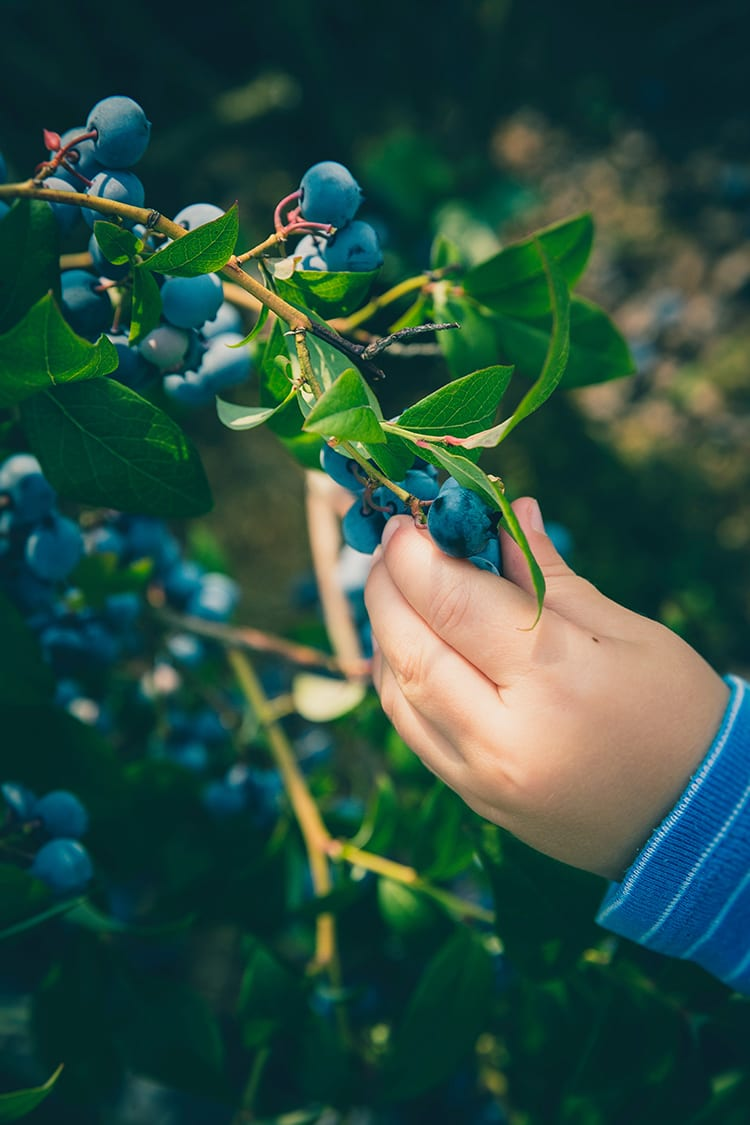 How to Grow a Kids Garden